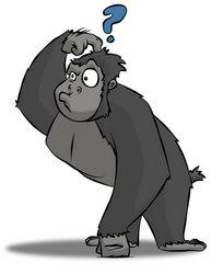 cutcaster-photo-100464711-Confused-Gorilla